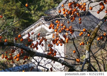 幹柿子飯 61522891