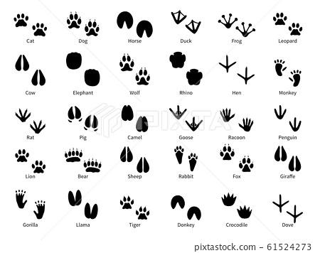 Animal footprints. Walking track animals paw with name, pets tracks, bird and wild animals trail, wildlife safari feet silhouette vector prints 61524273