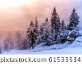 Winter forest scenery. Coniferous trees covered by snow and illuminated by evening sunset 61533534