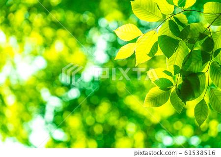 新鮮的綠色·生態形象 61538516