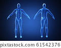 3d rendering of a human body with highlighted in pain 014 61542376