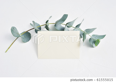 Mock up of Eucalyptus leaves and paper clip with place for text on white background. Wreath made of eucalyptus branch. Flat lay, top view 61555015