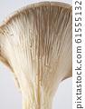 Oyster mushroom 61555132