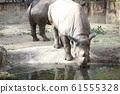 Rhino Zoo Animal 61555328