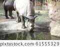 Rhino Zoo Animal 61555329