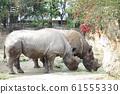 Rhino Zoo Animal 61555330