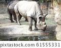 Rhino Zoo Animal 61555331