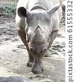 Rhino Zoo Animal 61555332