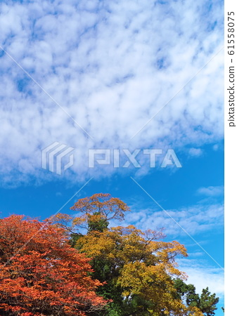Autumn leaves and blue sky and clouds 61558075