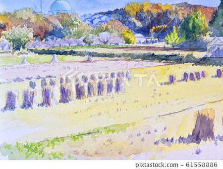 Rice field watercolor sketch 61558886