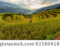 Green terraced rice fields at Mu Cang Chai 61560418