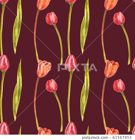 Watercolor Tulips. Wild flower set isolated on white. Botanical watercolor illustration, orange tulips bouquet, rustic flowers. 61567953