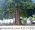 HAWAII Kapiolani Garden 61573285