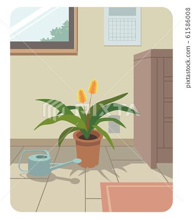 관엽 식물 잉꼬 아나나스있는 실내 풍경 61586008
