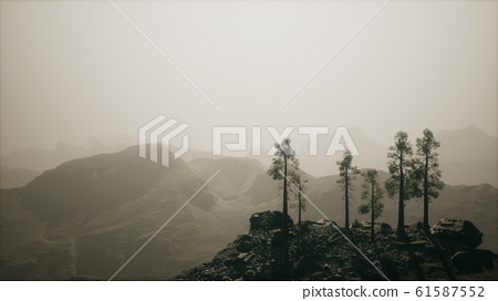 8K Fog hides the high forest in the mountains 61587552