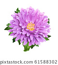 Aster summer flower 61588302