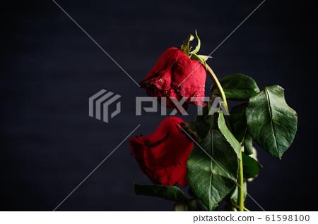 枯萎的玫瑰情人節枯萎的玫瑰玫瑰玫瑰 61598100