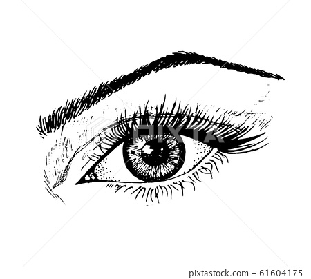 Female eye. Human biology, organs anatomy illustration. Engraved hand drawn in old sketch and 61604175