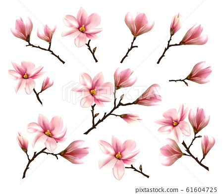 Big Collection with Branches of Pink Magnolia. 61604725
