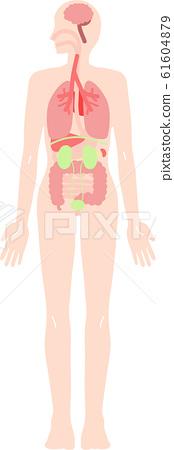 人體內部器官全身插圖集 61604879
