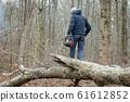 Lumberjack using a Gas-Powered Chain Saw cutting 61612852