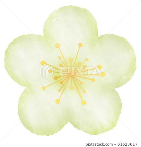 매화 흰색 수채화 풍의 일러스트 61623017