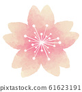 Cherry blossoms watercolor illustration material 61623191