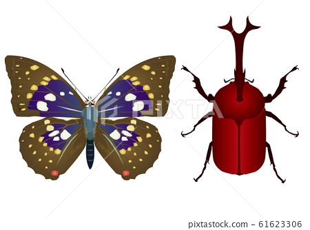 Oomurasaki和甲蟲 61623306