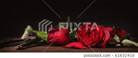 枯萎的玫瑰情人節枯萎的玫瑰玫瑰玫瑰 61632410