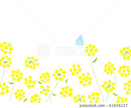春天的油菜花和蝴蝶背景圖 61656227