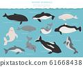 Marine mammals collection. Different porpoises 61668438