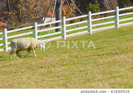 Livestock farm, cattle, dairy cattle, sheep and goat 136 61680926