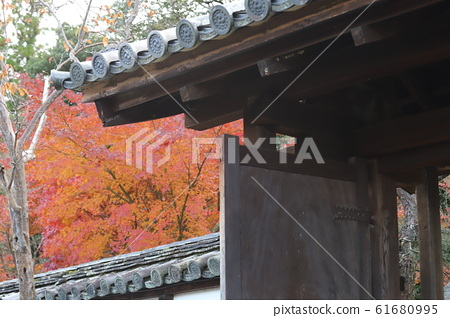 Autumn leaves of Ikkyuji 61680995