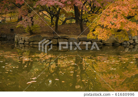 Colorful autumn landscape in the park and the countryside. Beautiful flowers and trees in the autumn season. 310 61680996
