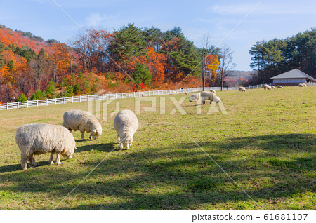 Livestock farm, cattle, dairy cattle, sheep and goat 112 61681107