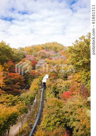 Colorful autumn landscape in the park and the countryside. Beautiful flowers and trees in the autumn season. 105 61681311