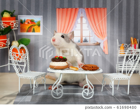 Little cute gray rat is having lunch at the table 61698480