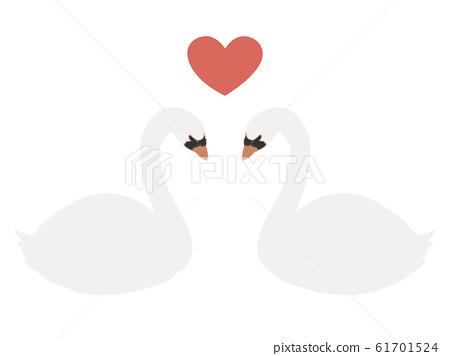 Swan couple 61701524