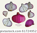 Red onion collection, hand draw sketch vector. 61724952