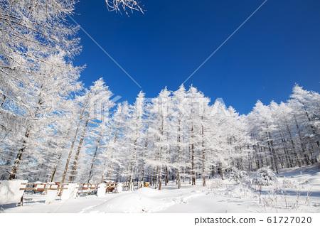 雪花樹 61727020