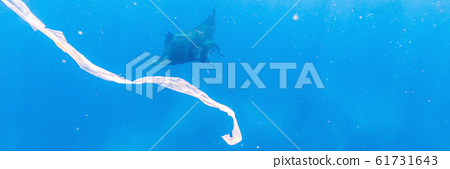 Manta ray and trash floats in the blue water of the ocean BANNER, LONG FORMAT 61731643
