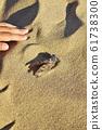 Cicada in Tottori Sand Dunes 61738300