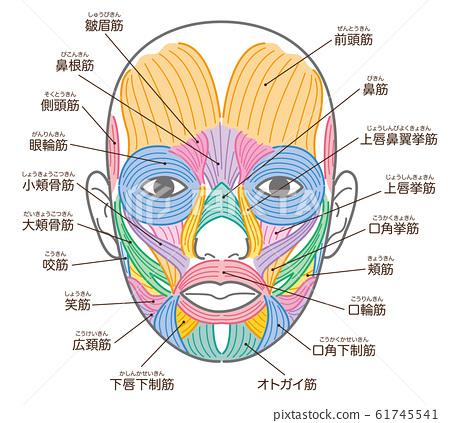 얼굴의 근육 구각 거근의 추가 명칭들이 61745541