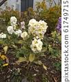 Stock yellow flowers coloring Uyu 61749715