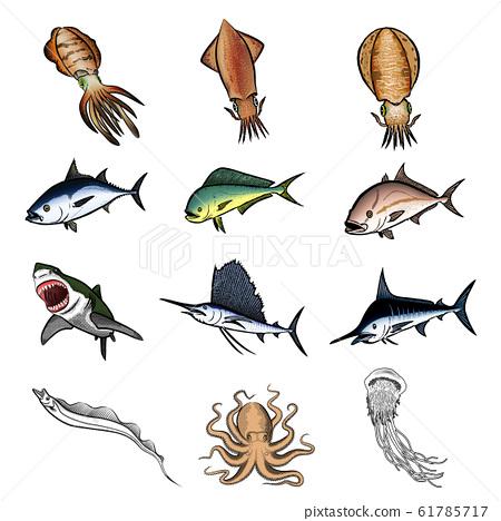 鹹水魚圖(彩色)設置1 61785717