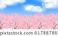 벚꽃 봄 꽃 배경 61788786