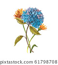 Watercolor hidrungea. Wild flower set isolated on white. Botanical watercolor illustration, hidrungea bouquet, rustic flowers. 61798708