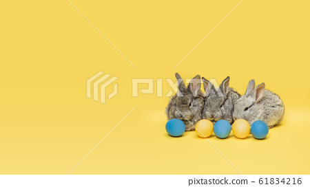 Adorable Easter bunnies isolated on yellow studio background, flyer, greeting card 61834216