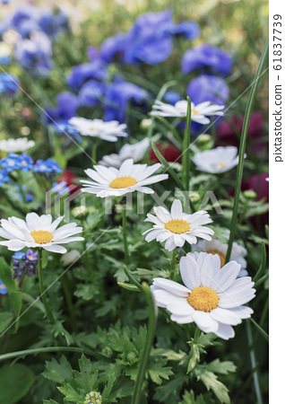 꽃 61837739