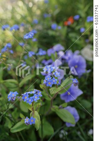 꽃 61837741
